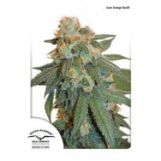 AUTO ORANGE BUD 7 kom D.P.