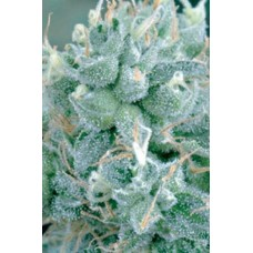 ARJANS STRAWBERRY HAZE 10 kom. G.H.