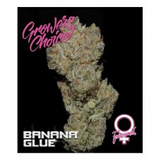 Banana Glue fem 3 kom. G.C.