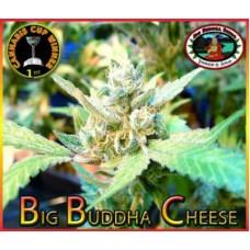BIG BUDDHA CHEESE 5 kom BBS
