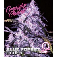 Blue forest berry Fem 3 kom. G.C.