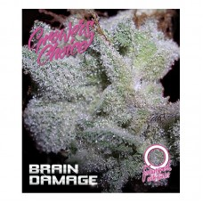 Braindamage feminized auto 3 kom. G.C.