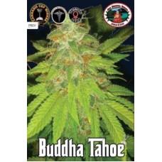 BUDDHA TAHOE 5 kom BBS