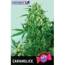Caramelice Feminised 5 kom POS