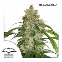 CBD AUTO WHITE WIDOW 7kom. D.P.