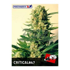 Critical # 47 Feminised 5kom pos