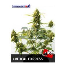 Critical Express 5kom pos