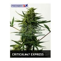 Critical # 47 Express 5kom pos