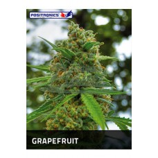 Grapefruit Feminised 5kom pos