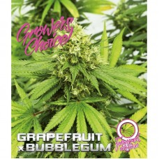Grapefruit x bubblegum feminized auto 3 kom. G.C.