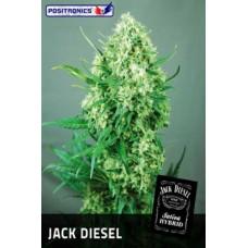Jack Diesel Feminised 5 kom POS