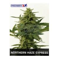 Northern Haze Express 5kom pos