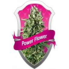 POWER FLOWER 10 kom. RQS