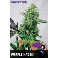 Purple Haze #1 Feminised 5 kom POS