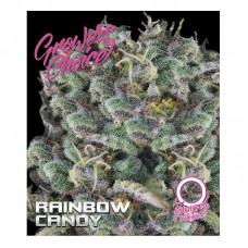 Rainbow candy feminized auto 3 kom. G.C.
