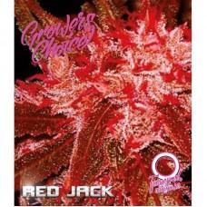 Red Jack feminized auto 3 kom. G.C.