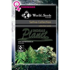 Sativa Collection Feminised wos