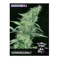 Somango #47 Feminised 5kom pos