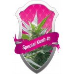 SPECIAL KUSH #1 - 10 kom. RQS