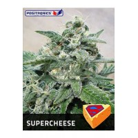 Super Cheese Feminised 5kom pos