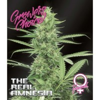 The Real Amnesia fem 5 kom. G.C.