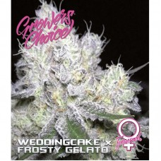 Weddingcake x Frosty Gelato Fem 3 kom. G.C.